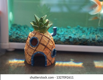 SpongeBob SquarePants pineapple home with Goldfish tank, Australia