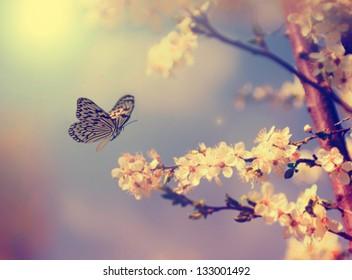 春のヴィンテージ蝶と桜の花
