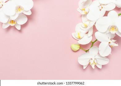 Hermosas flores de orquídeas Phalaenopsis blancas sobre fondo rosa pastel, vista superior plana laical. Flor tropical, rama de orquídea de cerca. Fondo rosa orquídea. Vacaciones, Día de la Mujer, Tarjeta de flores, belleza