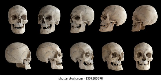 Human anatomy. Human skull. Collection of rotations of the skull. Skull at different angles. Isolated on black background.