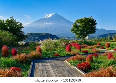 Monte Fuji y el lago Kawaguchi Oishi Park Kochia, Prefectura de Yamanashi, Japón