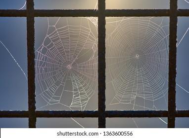 Ein Makrobild von zwei nebeneinander gesponnenen Spinnennetzen in getrennten Löchern in einem Stahlgitterzaun. Das Sonnenlicht im Morgengrauen leuchtet von hinten. Aufgenommen in Goodwood Island Wharf, NSW.