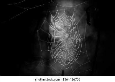 蜘蛛の巣白黒