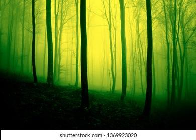 Lebendige gelbgrüne neblige Waldlandschaft.
