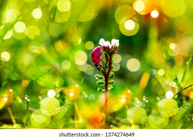 春はデンマークに到着、春の花の背景