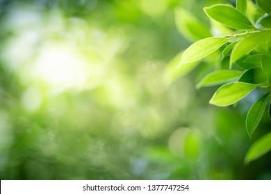 Nahaufnahme Naturansicht des grünen Blattes auf unscharfem Grünhintergrund im Garten mit Kopienraum für Text unter Verwendung der natürlichen grünen Pflanzenlandschaft, der Ökologie, des frischen Tapetenkonzepts als Sommerhintergrund.