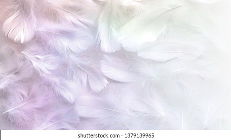 Angelic Pastel tinted White feather background - small fluffy white feathers randomly scattered forming a background fading into white on right side
