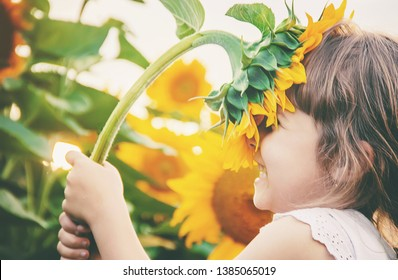child in the field of sunflowers is a small farmer. selective focus. nature.