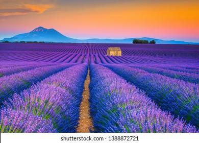 美しい夏の自然の風景と農業地域。日没、ヴァレンソール、プロヴァンス、フランス、ヨーロッパで美しい紫色のラベンダー畑のある人気の旅行と写真撮影の場所