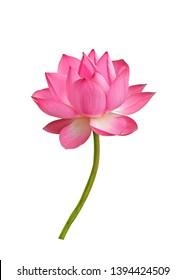 Lotusblume lokalisiert auf weißem Hintergrund