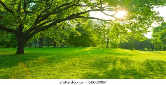 Gartensonnenlicht am Morgen