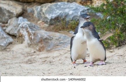 砂の上を歩くペンギン
