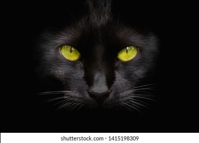 Retrato de gato negro con ojos verdes sobre fondo oscuro
