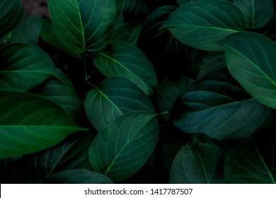 tropische Blätter, abstrakte grüne Blattbeschaffenheit, Naturhintergrund