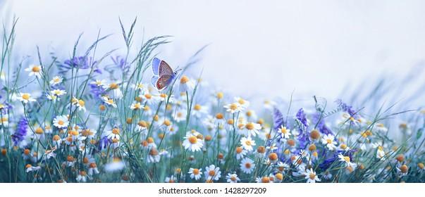 Hermosas flores silvestres manzanilla, guisantes púrpuras, mariposa en neblina matutina en macro de primer plano de naturaleza. Formato panorámico horizontal, espacio de copia, tonos azules fríos. Encantadora imagen artística aireada pastoral.