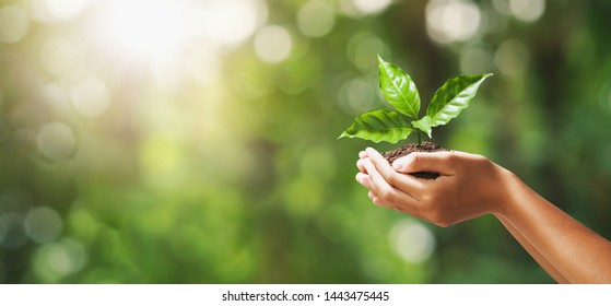 mano que sostiene la plántula en desenfoque de fondo verde de la naturaleza. concepto eco día de la tierra