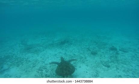 In het water op de Malediven met een schildpad