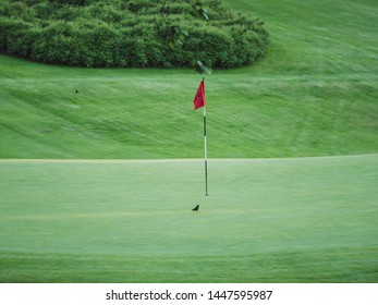 Image of little black bird on golf course sitting on the green next to red flag