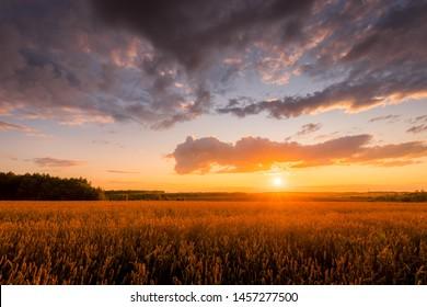 Szene des Sonnenuntergangs auf dem Feld mit jungem Roggen oder Weizen im Sommer mit einem bewölkten Himmelhintergrund. Landschaft.
