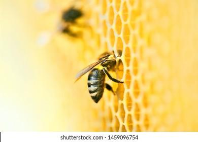 Foto macro de uma colmeia de abelhas em um favo de mel com copyspace. As abelhas produzem mel fresco e saudável. Conceito de apicultura