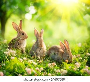 Kaninchen. Schönheitskunstentwurf des niedlichen kleinen Osterhasen in der Wiese. Frühlingsblumen und grünes Gras. Sonnenstrahlen
