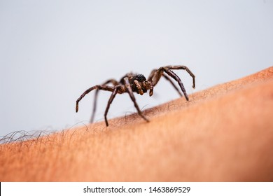 giftige Spinne über Person Arm, giftige Spinne beißende Person, Konzept der Arachnophobie, Angst vor Spinne. Spinnenbiss.