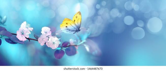 飛行中の美しい青黄色の蝶と水色と紫の背景マクロの日の出で春に開花アプリコットの木の枝。エレガントな芸術的なイメージの性質。バナーフォーマット、コピースペース。