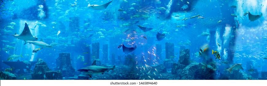 海中に。水中をテーマにしたイラスト、魚や海の生き物