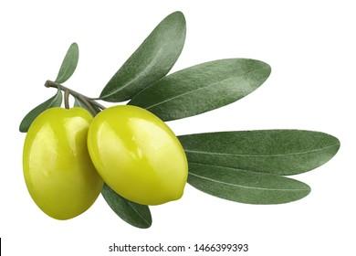 Rama de olivo con dos deliciosas aceitunas verdes, aislado sobre fondo blanco.