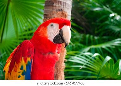 Tropische Tierwelt und exotisches Vogelkonzeptthema mit scharlachrotem Ara, der auf einem Ast im amazonischen Regenwald mit Kopienraum sitzt