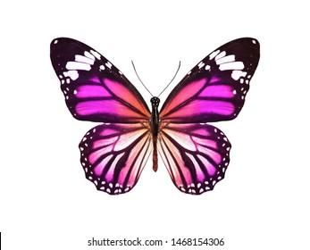 mehrfarbiger Schmetterling für Design. isoliert auf weißem Hintergrund