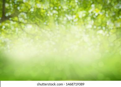 Fondo de textura verde, fotos borrosas y bokeh debajo del árbol, naturaleza fresca saludable o concepto bio.