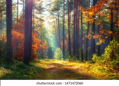 Amazing autumn forest in morning sunlight. Red and yellow leaves on trees in woodland. Golden forest landscape.