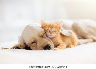 一緒に寝ている猫と犬。子猫と子犬が昼寝をします。ホームペット。動物の世話。愛と友情。家畜。