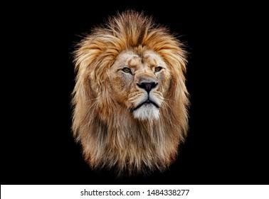Farbiger Löwenkopf auf schwarzem Hintergrund