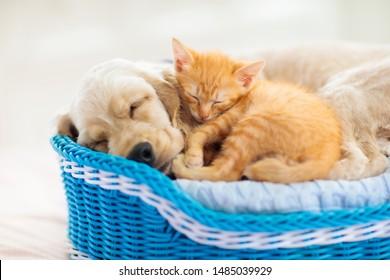 かごの中で一緒に寝ている猫と犬。子猫と子犬が昼寝をします。ホームペット。動物の世話。愛と友情。