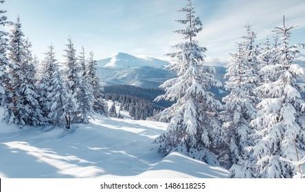 冬の素晴らしいアルプスの風景。森の幻想的な凍るような朝。暖かい日光の下で雪に覆われた松の木。幻想的な山の高地。素晴らしい冬の背景。素晴らしいクリスマスシーン