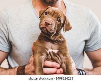 若い、かわいい子犬を抱き締める魅力的な男。クローズアップ、白い孤立した背景。スタジオ写真。ケア、教育、服従訓練、ペットの飼育の概念