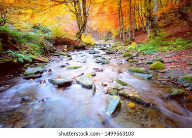Bunter Herbst im Naturpark - lebhafte Waldbäume und schneller Fluss mit Steinen