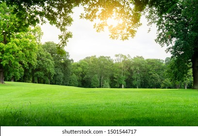 Fresh air and beautiful natural landscape of meadow with green tree  in the sunny day for summer background, Beautiful lanscape of grass field with forest trees and enviroment public park with sun ray