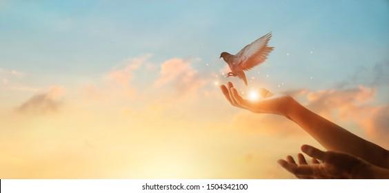 Vrouw bidden en vrije vogel genieten van natuur op zonsondergang achtergrond, hoop concept