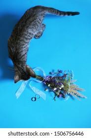 Katze, die einen Blumenstrauß von Wildblumen und Ringen für rustikalen Hochzeitsstil auf blauem Hintergrund, Brautmorgen riecht