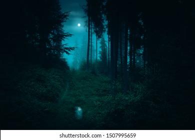 Fußweg im dunklen, nebligen, geheimnisvollen Wald. Vollmond am Himmel mit Reflexion in der Pfütze auf Spur am Fichtengeheimnis-Nachtwald. Halloween Hintergrund.