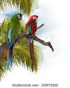 Bunte Ara Papageien, die auf einem Zweig sitzen