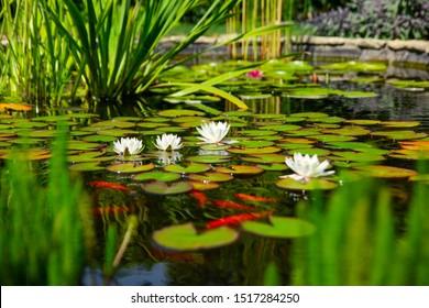魚と花のある自家製の池