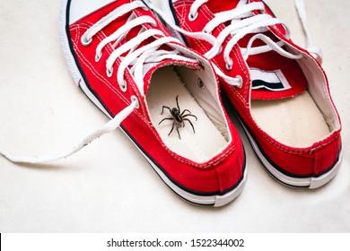 Braune Spinne in den Turnschuhen eines Kindes. Gefahr von Spinnenbissen. Brauchen Wohnerkennung.Arachnophobie-Konzept.