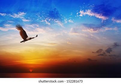 美しい夕焼け空を背景に飛ぶワシ-猛禽類-シロガシラトビ