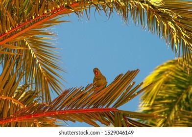 Beleuchtet durch Sonnenpalme mit einem Papagei, der auf Zweig im blauen Himmel, Spanien, Sommerzeit sitzt