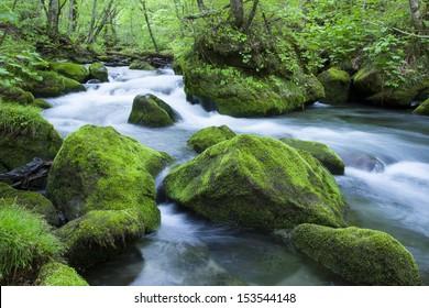 緑の森を流れる