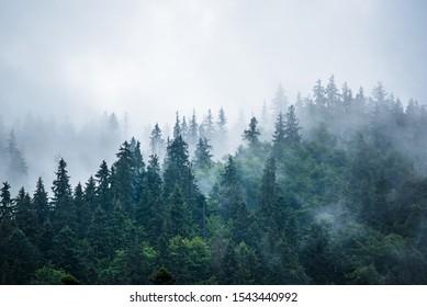 ヴィンテージのレトロなヒップスタースタイルのモミの森とコピースペースと霧の霧の山の風景